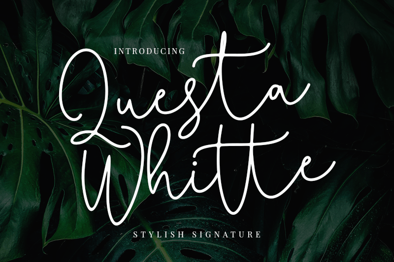 Download Questa Whitte font (typeface)