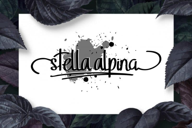 Download Stella Alpina font (typeface)