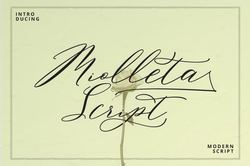 Download Miolleta font (typeface)