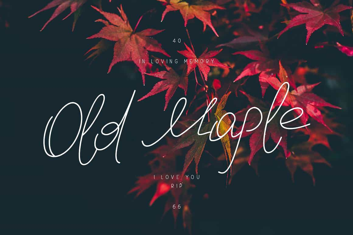 Download Old Maple font (typeface)